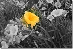 new photo flower
