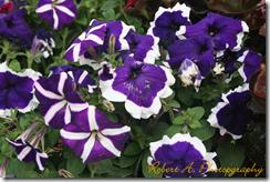 Omer flower
